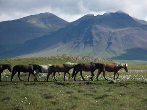 randonnée à cheval Islande Centre photo 5