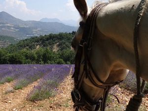 randonnée à cheval FRANCE Provence-Alpes photo 3